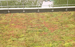 GuaraGREEN_Roofing